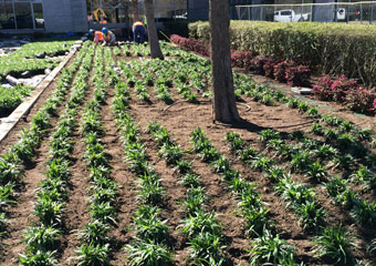 Industrial & Commercial Landscaping Houston, TX
